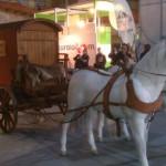 Targi Turystyczne we Wrocławiu (31)