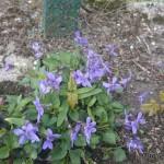 wiosna w bardzie (1)