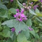 wiosna w bardzie (3)