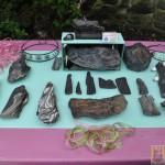 Wystawa skamieniałych Debów Fundacji Serce Barda  (1)