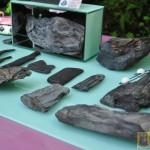 Wystawa skamieniałych Debów Fundacji Serce Barda  (30)