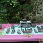 Wystawa skamieniałych Debów Fundacji Serce Barda  (7)