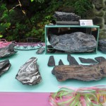 Wystawa skamieniałych Debów Fundacji Serce Barda  (8)