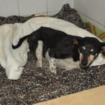 szukamy właścicieli psów (1)