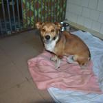 szukamy właścicieli psów (2)