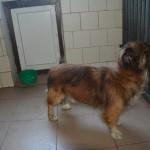 szukamy właścicieli psów (3)