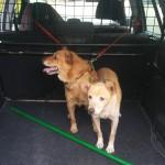 psy szukają właścicieli (1)