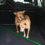 psy szukają właścicieli (2)