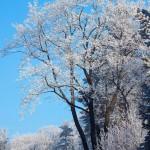 Bardo zimowe w obiektywie Anny Piwowarskiej (19)