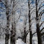 Bardo zimowe w obiektywie Anny Piwowarskiej (23)