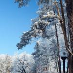 Bardo zimowe w obiektywie Anny Piwowarskiej (4)