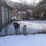 Psy szukają domu (1)