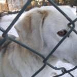 Psy szukają domu (2)