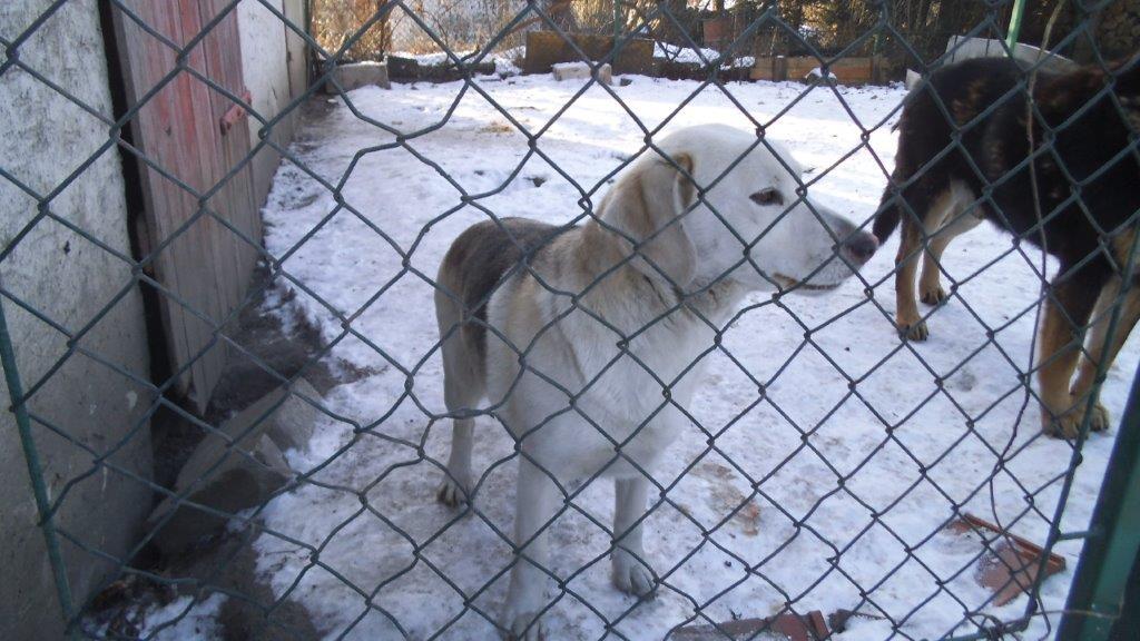 Psy szukają domu (3)