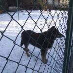 Psy szukają domu (4)