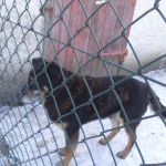 Psy szukają domu (5)