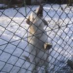 Psy szukają domu (6)