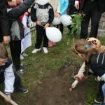 Uroczyste sadzenie dębu Cysters (14)