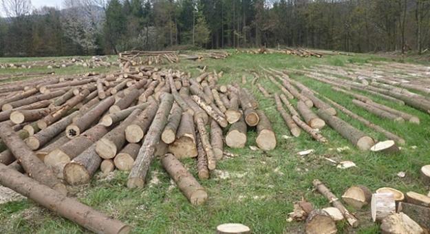 Wycinka drzew w Gminie Bardo