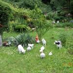 Konkurs Piękny Ogród (17)