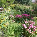 Konkurs Piękny Ogród (19)