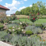 Konkurs Piękny Ogród (21)