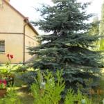 Konkurs Piękny Ogród (25)