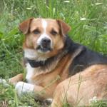 Znaleziono psa (2)